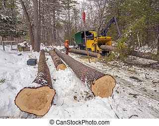 Tree cutting and chipping on residential road