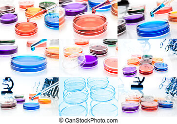 Collage (set) of petri dishes.lab tools.