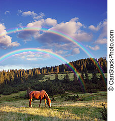 A horse grazing in the mountains - Evening landscape in...