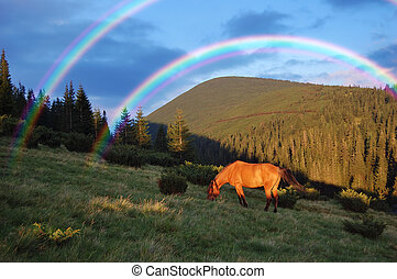 Horse in the mountains - Horse grazing in the mountains and...