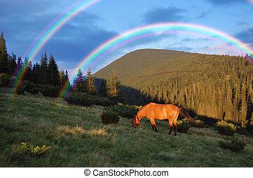 paarde, Bergen
