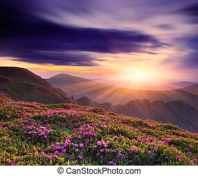 Beautiful sunset in the spring in the mountains - Spring...