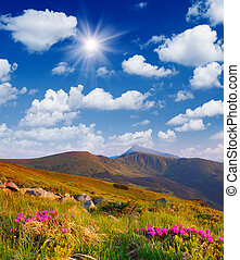 Flowering shrubs in the mountains - Sunny landscape with...