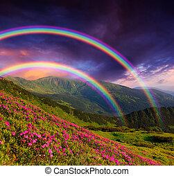 Rainbow over the flowers - Mountain landscape with a rainbow...