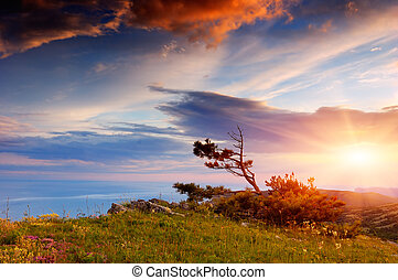 Mountain pine on the rock - Evening Landscape with fantastic...