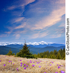 Beautiful mountain flowers - Spring landscape with beautiful...