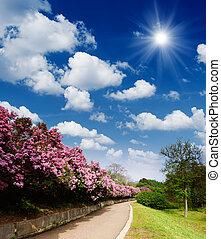estrada, primavera, jardim