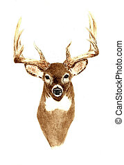 Deer - Front View - Watercolor Painting of a Male Deer