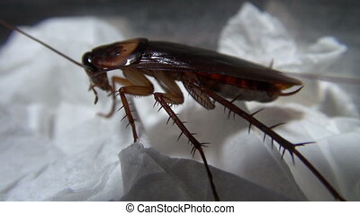 cockroach in the kitchen