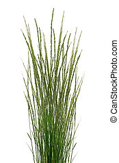 Tropical Grass Stalks - Bunch of Tropical Grass Stalks on...