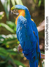 Yellow blue Ara parrot portrait