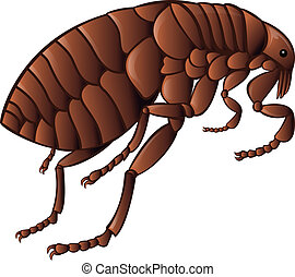 Flea - Vector image of simbol of brown flea