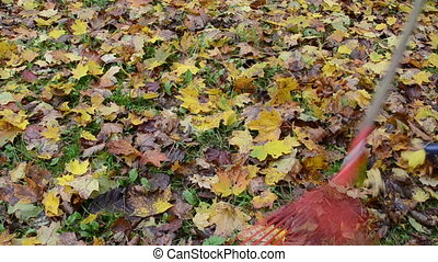 rake autumn leaves - closeup of woman in rake colorful...