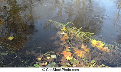 water flow leaves - closeup of colorful autumn leaves in...