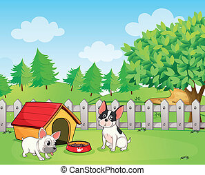 A backyard with two dogs