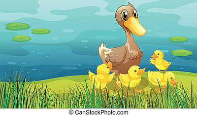 A duck and her ducklings at the riverbank - Illustration of...