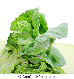 green cabbage on white