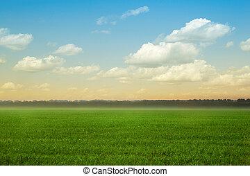 verão, capim, céu, verde, paisagem