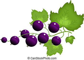 Black currant, isolated on the white