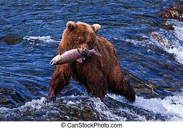 Grizly, oso, Alaska