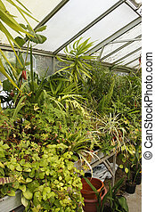 greenhouse interior kings heath park birmingham west...