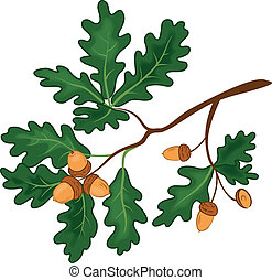 Oak branch with leaves and acorns - Oak branch with green...