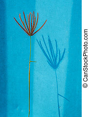 Grass flower and shadow on blue painted wall