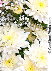 chrysanthemums - white chrysanthemums