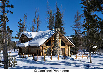 Forest Winter Cabin