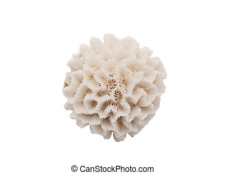 Round Coral Isolated