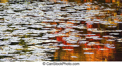 Orange Red Lily Pads Water Reflections Van Dusen Gardens -...