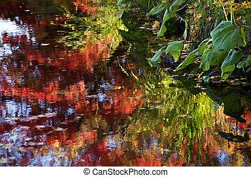 Van Dusen Garden Water Reflections Vancouver British...