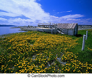 Sea shore with flovers and old boat, Atlantic Canada, New Foundland