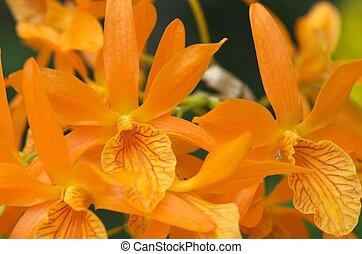 cute orange orchid flowers - this photo is taken in Nagoya...