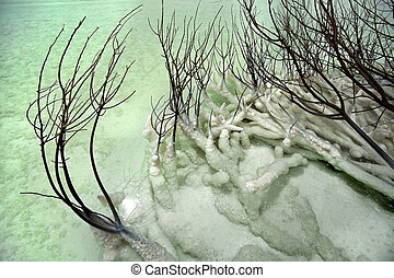 Dead Bush in Dead Sea - Part of a dead bush lying covered...