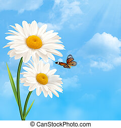 Under the blue skies. Abstract natural backgrounds with daisy