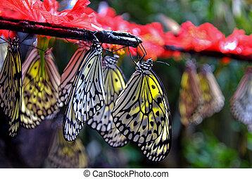 Hanging Paper Kite Butterflies - Paper Kite Butterflies...