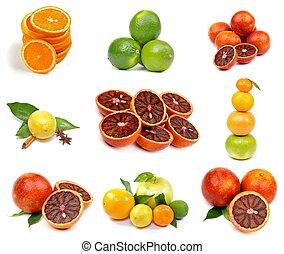 Citrus Collection with Oranges, Lime, Blood Oranges, Lemon,...
