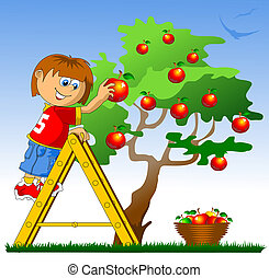apple picking - little boy collects red apples vector...