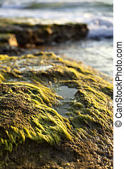 Beach Algae at Sunset - Shallow depth of field close up of...