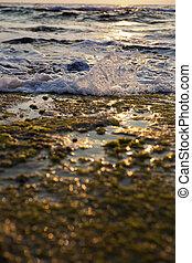 Wave Smashing on Seaweed Rock - Gushing surf of a wave...