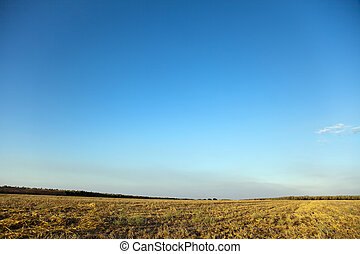 Harvested Summer Field - A harvested field vibrantly lit by...