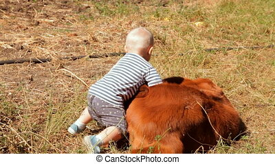 Kid playing with a newborn calf on a farm