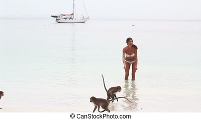 macaque monkey plays with girl at the beach