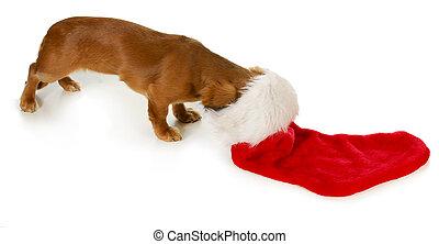 curious christmas puppy - christmas dog - miniature...