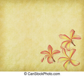 frangipani or plumeria tropical flower with old grunge antique paper texture