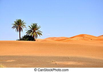Sahara - The Great Desert