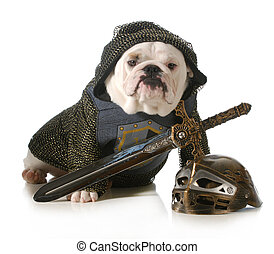 dog dressed as knight - dog dressed up as a knight isolated...