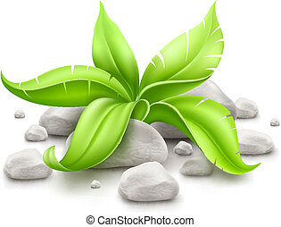 plant with green leaves in stones