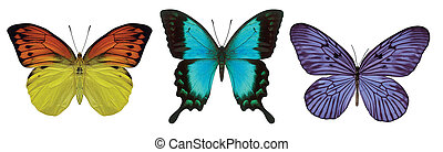 3 Butterflies - Three butterflies on white background with...